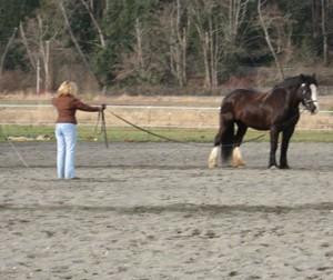 HorseLonge377884347